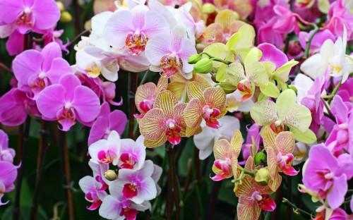 Чудеса сбываются - выставка орхидей