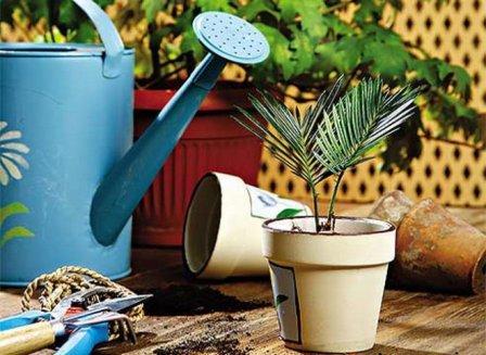 Инвентарь для выращивания комнатных растений
