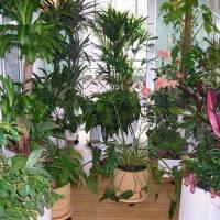 Как помочь комнатным растениям пережить холода