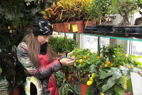 Как выбрать растение. Выбор и приобретение комнатных растений