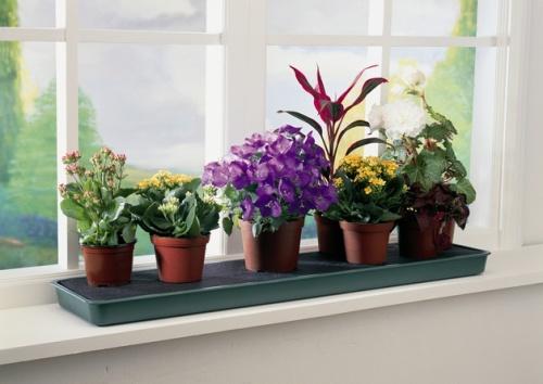 Названия комнатных растений