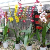 Орхидеи - капризули или нет?
