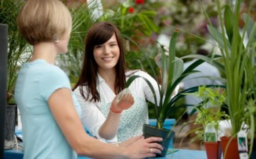 Покупка растений зимой. Как избежать ошибок
