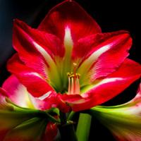 Комнатные цветы и растения, помогающие в сексе