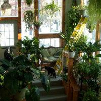 Устройте зимний сад в квартире