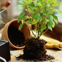 Уход за комнатными растениями в феврале