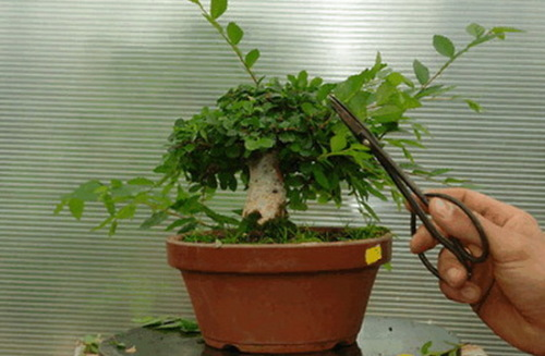 Основные приемы формирования растений