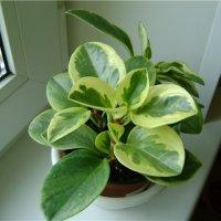Перестановка для комнатных растений с места на место