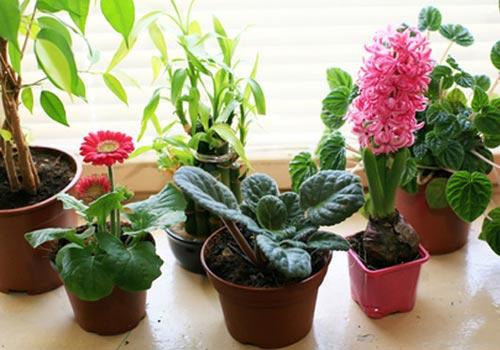 Мои эксперименты с выращиванием цветов из семян